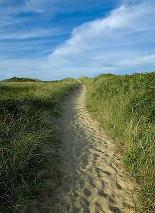 Dionis-Path_WEBSITE.jpg