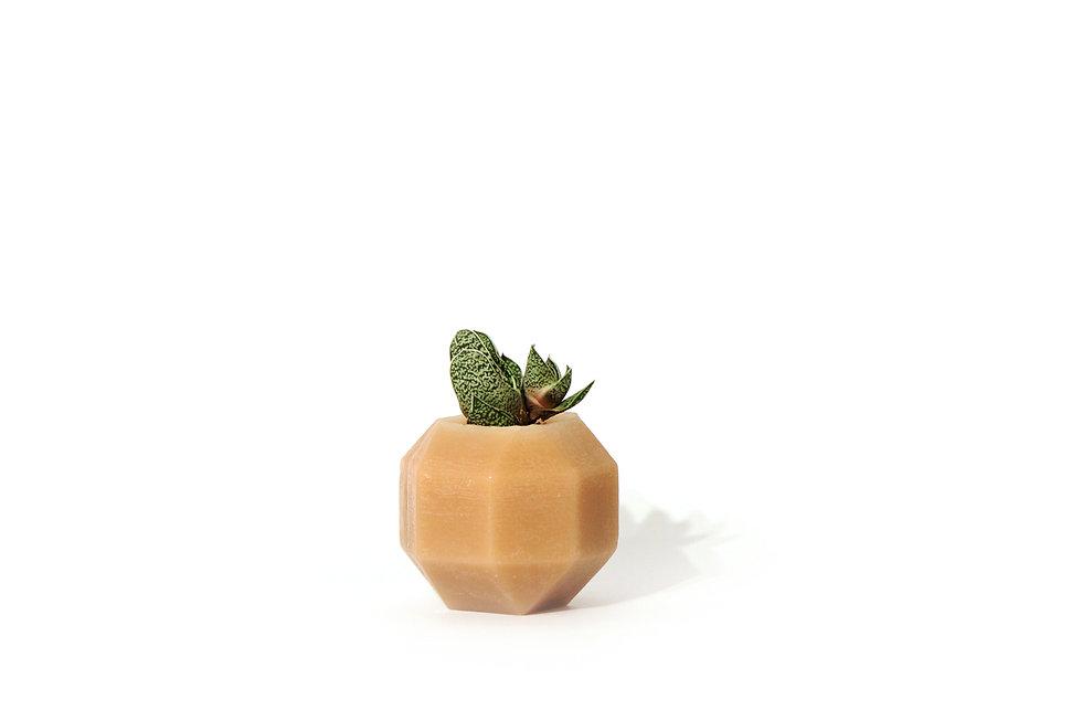HUGIR_ROMBI_brown_vase_plant.jpg
