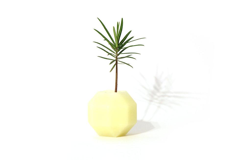 HUGIR_ROMBI_white_vase_plant.jpg