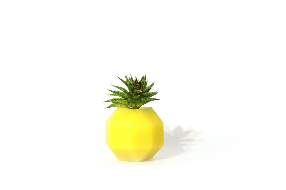 HUGIR_ROMBI_yellow_vase_plant.jpg