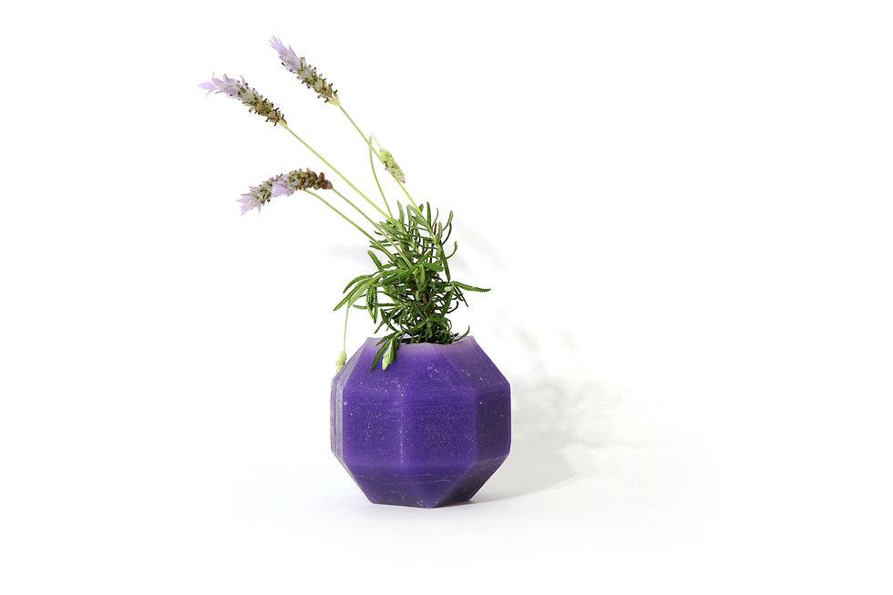 HUGIR_ROMBI_purple_vase_plant.jpg
