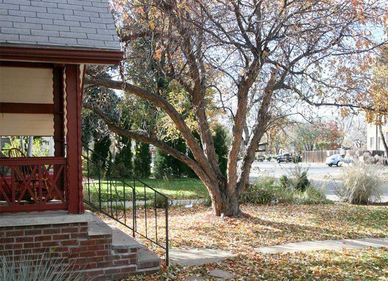 brick house leaves falling autumn