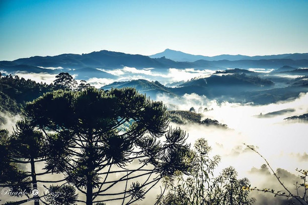 The surroundings of Monte Verde in the mist...