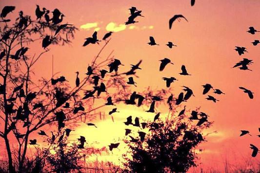 Birdwatching in the Pantanal