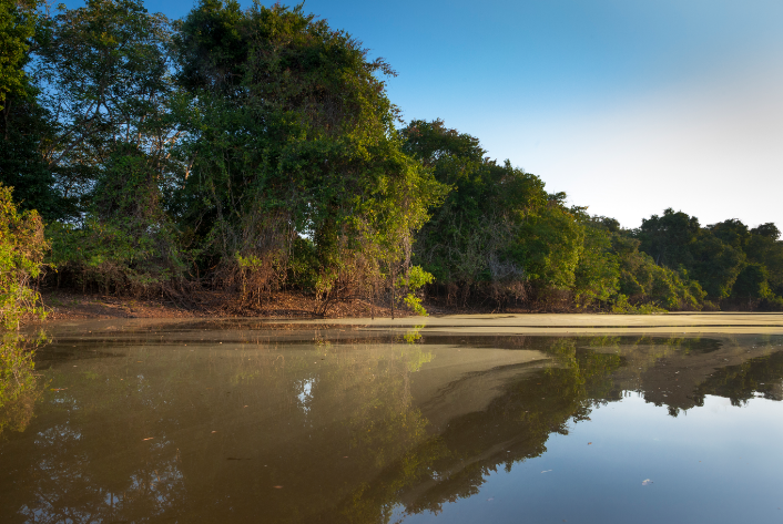 Riverside landscape in the Pantanal