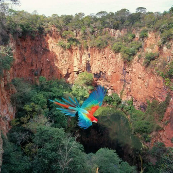 Buraco das Araras (Macaw Hole, Bonito)
