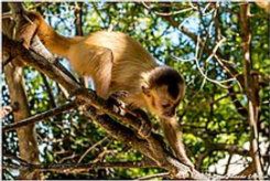 E - Macaco oasis.jpg