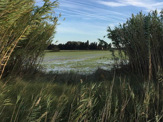 The Camargue with its beautiful marshes and lagoons