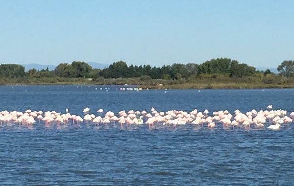 Pink floyds, less than 30 meters from ViaRhôna bike path