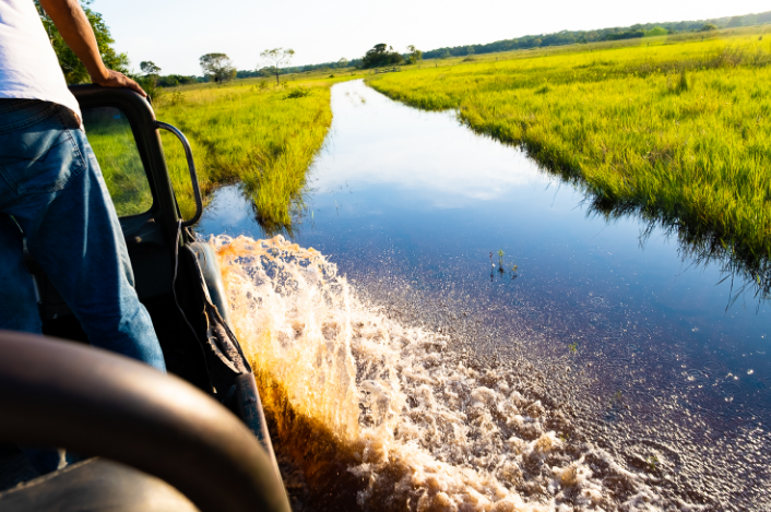 Day safari in the Pantanal
