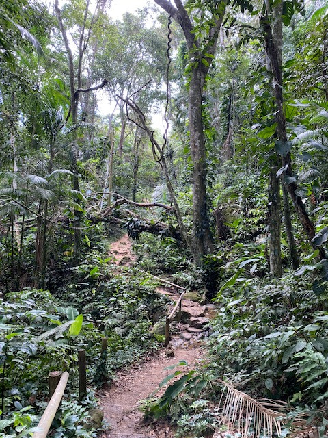 Wide path, quite at the end, but still in dense forest !