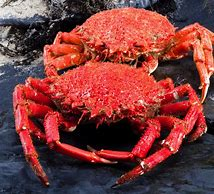 King Crab (Argentina)