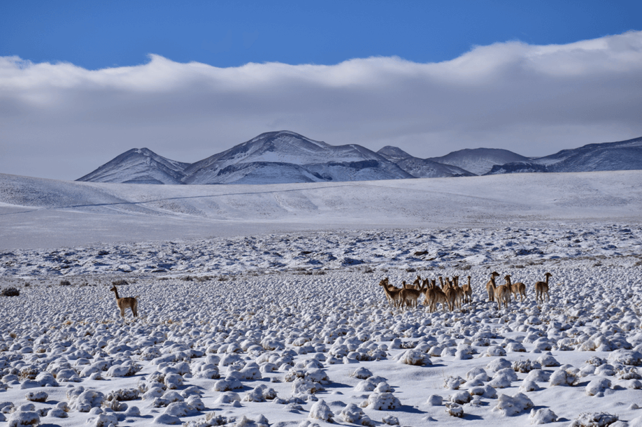 Chilean Altiplano