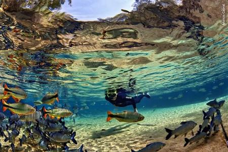 Snorkeling in Bonito