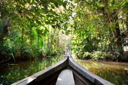 Amazonia Expedition