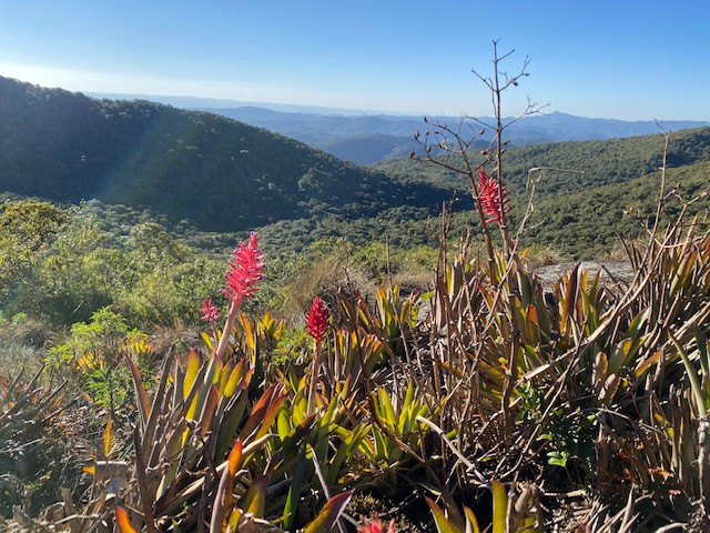 On the summits, bromeliads stand out in the landscape.