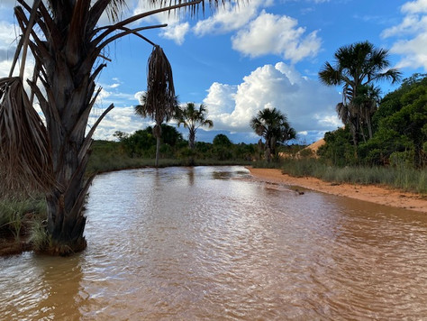From the car park, a 20mn hike leads visitors to the foot of the Jalapão dunes through a pretty marshy area.