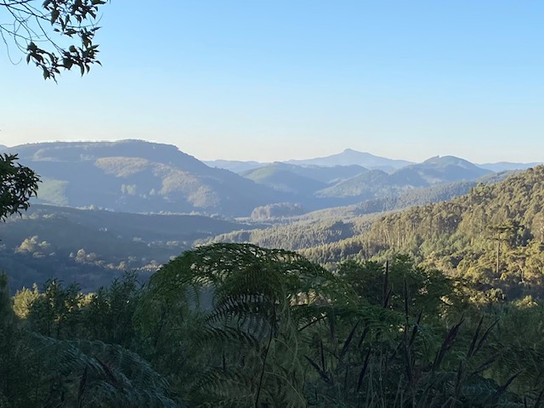 The hikes take place mainly in the shade of the beautiful forests spread all around Monte Verde...