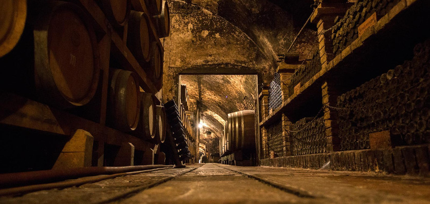 Wine production, Vukovar (Day 5)