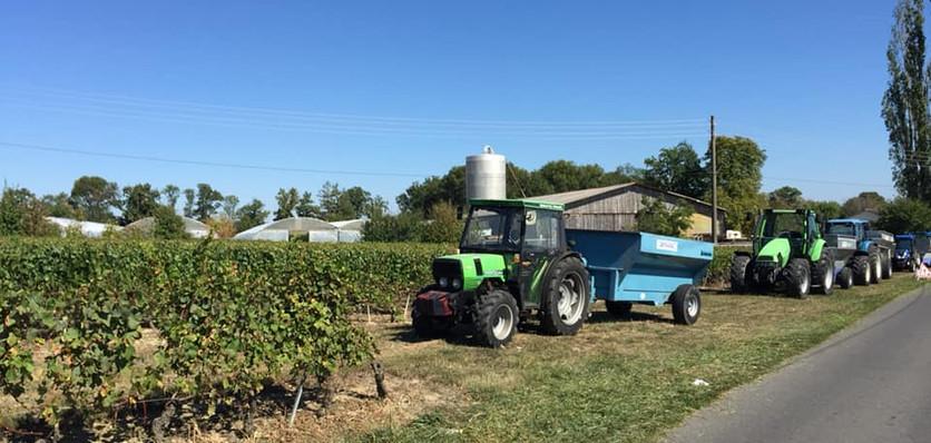 Grape harvests in Geneva hinterland (Day 1)