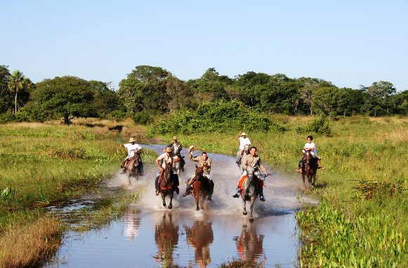 Cavalgade in the meadows and marshes of Pantanal