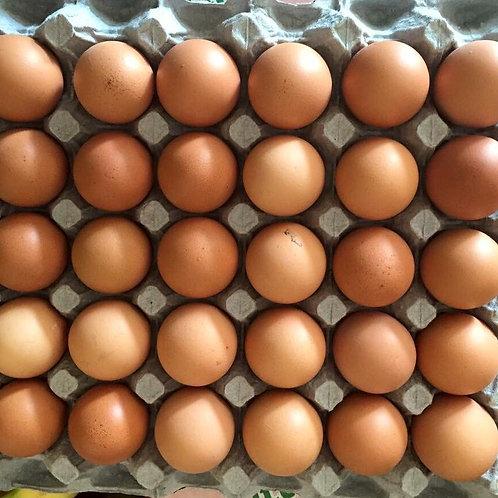 Tray of 20 X-large Farm Eggs