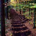 Wald 160152