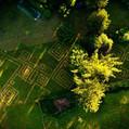 Rasen 180001