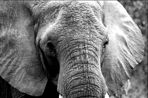 elefante imagem.png