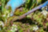 gardening-3296781_1920.jpg