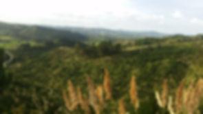 Moir Hill 1.jpg