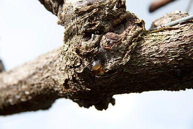 kiwifruit-3.jpg