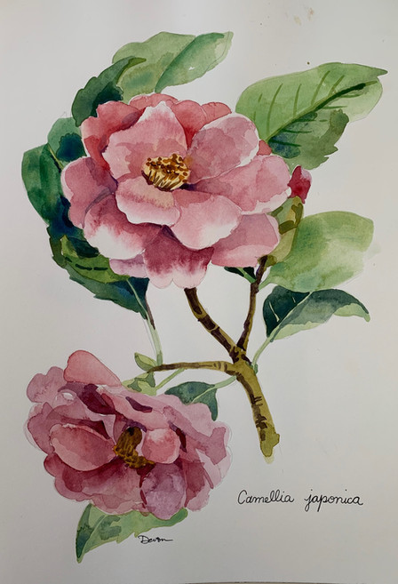 Available - Watercolor Painting - Botanicals 2 of 3