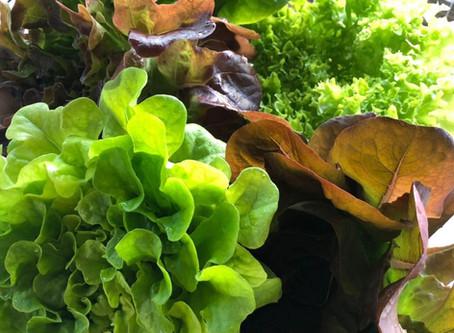 Garden of Esther makes a new friend - Ecotone Farm