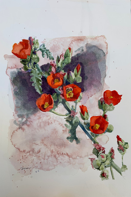 Available - Watercolor Painting - Orange Mallow