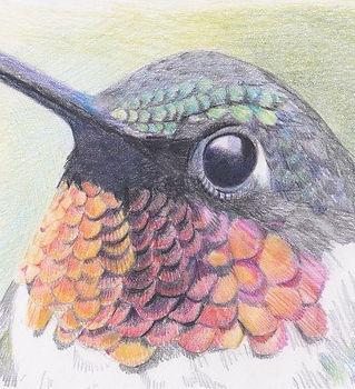 devon meyer hermosa inn hummingbird.jpeg