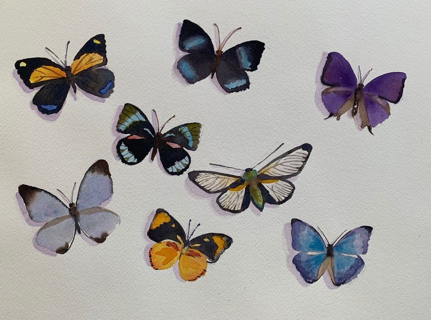 Available - Watercolor Painting - Rainbow Insects 2 of 3