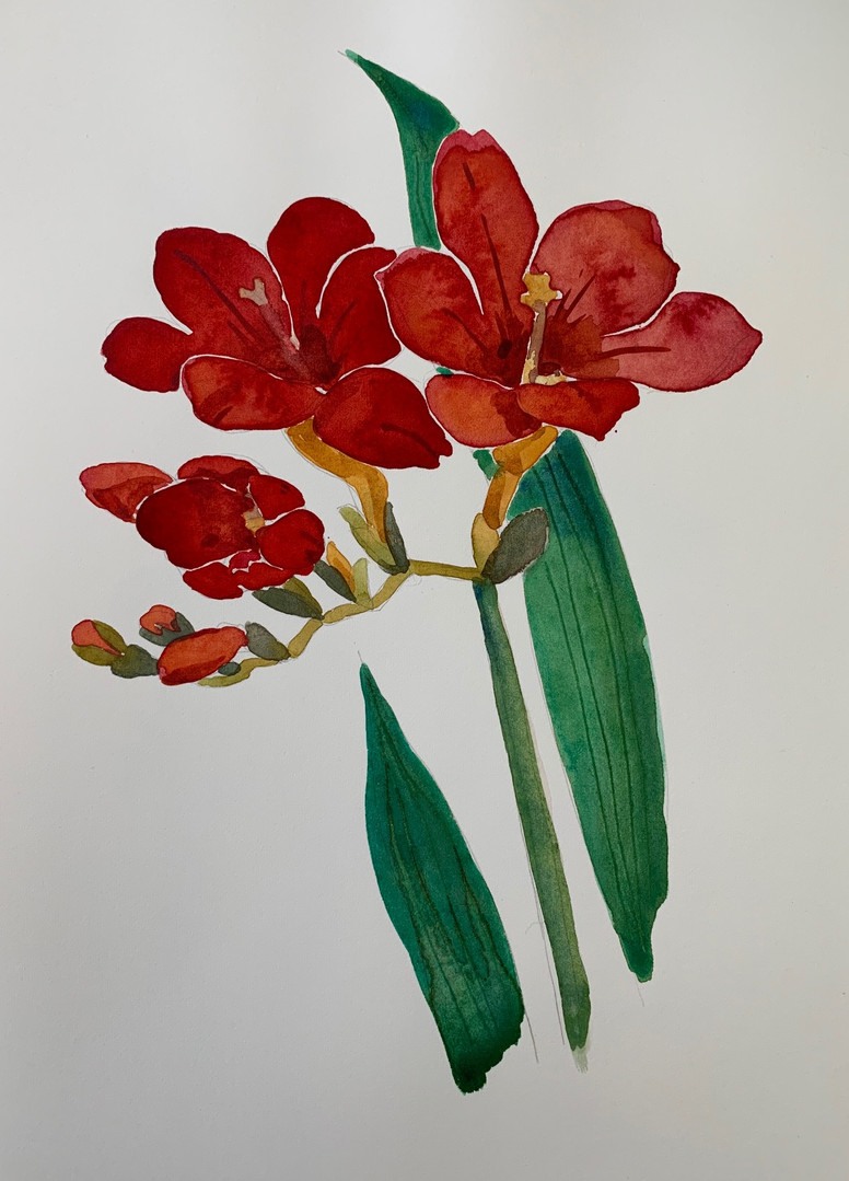 Available - Watercolor Painting - Botanicals 3 of 3