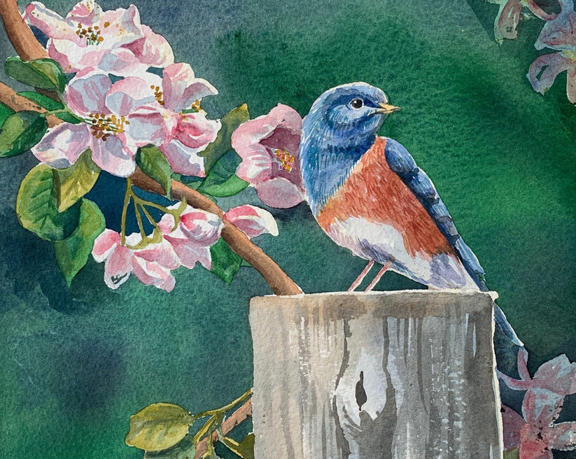 Available - Watercolor Painting - Blossom Bird