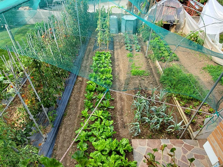 Gardens give you more than good food
