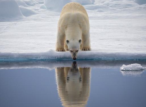 Tribeless Topics: Reflecting Pool