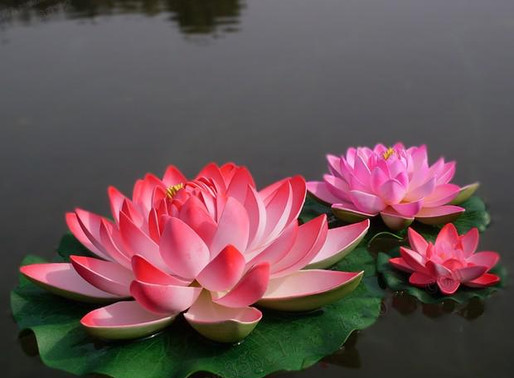 "Tribeless Topics: ""No Mud, No Lotus"""