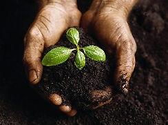 garden_soil.jpg