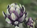 Artichoke with PanPastels with Brushes
