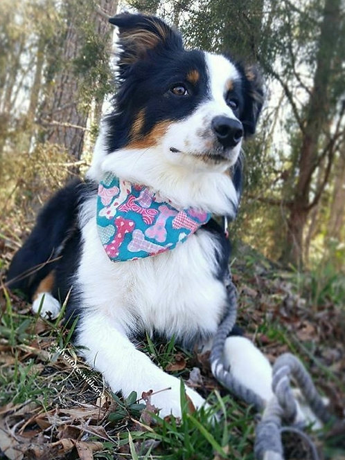 Stars & Stripes Bones (Pink/Blue) (Over the Collar)
