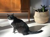 Katze_Interior.jpg