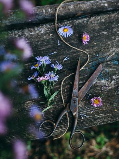 цветы-в-саду.png