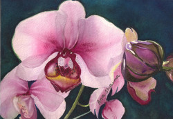 SOLD - Orchid Study I