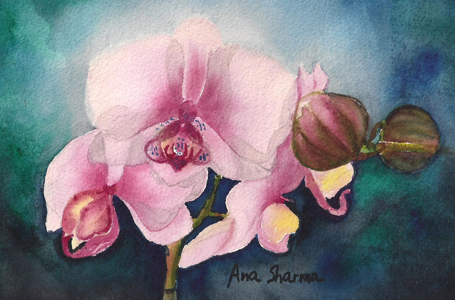 SOLD - Orchid Study III
