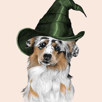 Aussie Shepherd Witch.jpg